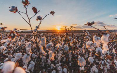 ¿Qué es el algodón orgánico y por qué te interesan las prendas fabricadas con él?