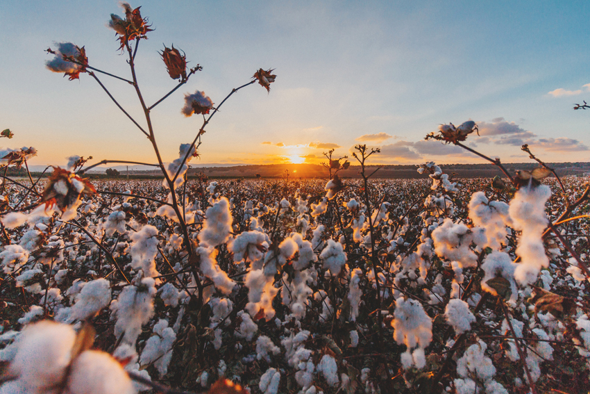 Qué es el algodón orgánico y por qué te interesan las prendas fabricadas con él